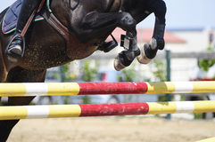 Jumping horse. Horse jumping  obstacle in sport event Royalty Free Stock Image