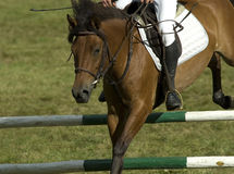 Jumping horse. Horse jumping during the pony competition in Poland royalty free stock image