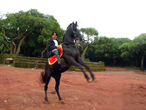Jumping Horse Stock Images