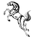 Jumping horse,black white picture Royalty Free Stock Photography