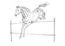Jumping horse drawing. Jumping horse pencil drawing, hand-drawn Royalty Free Stock Photo