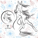 Jumping horse vector isolated on Colorful background pattern vector Royalty Free Stock Photo