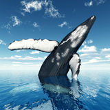 Jumping Humpback Whale Royalty Free Stock Photos