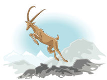 Jumping Ibex Stock Photography