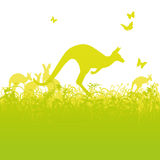 Jumping kangaroos in Australia Stock Photo
