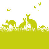 Jumping kangaroos in the grass Stock Image