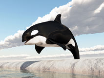 Jumping killer whale Royalty Free Stock Images