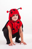 Jumping lady bug Royalty Free Stock Photos