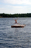 Jumping in lake Stock Images