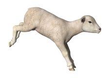 Jumping Lamb Royalty Free Stock Image