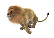 Jumping Lion Stock Photos