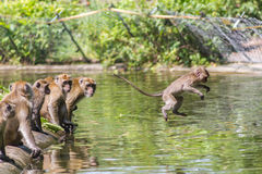 Jumping monkey directly above Royalty Free Stock Images