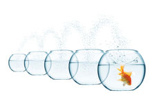 Jumping out fish from aquarium. On white background Stock Photos