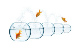 Jumping out fish from aquarium Stock Photography
