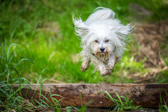 Jumping over a tree trunk Royalty Free Stock Images