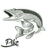 Jumping Pike isolated. Monochrome illustration of jumping pike isolated on white background, vector Royalty Free Stock Photos