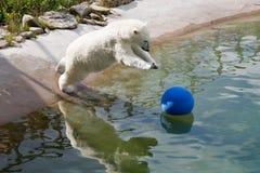 Jumping polar bear Royalty Free Stock Photos