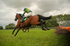 Jumping race horse royalty free stock image