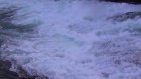 Jumping Salmon, Canada. Salmon jumping upstream during salmon run in British Columbia, Canada stock video footage