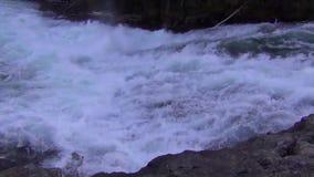 Jumping Salmon, Canada. Salmon jumping upstream during salmon run in British Columbia, Canada stock footage