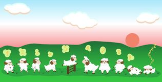 Jumping sheep. On green grass Stock Photo