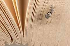 Jumping spider and book sheets stock photo