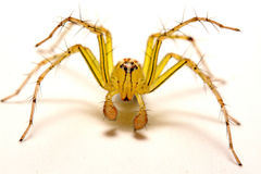 Jumping Spider. A close up of a jumping spider. Royalty Free Stock Photos
