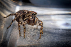Jumping Spider Macro. Super macro close up jumping spider on glass surface Royalty Free Stock Photography