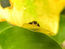 Jumping Spider in the rain. Stock Image