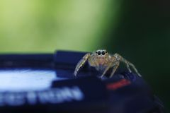Jumping spider on the watch Royalty Free Stock Photography