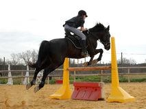 Jumping stallion and girl Royalty Free Stock Photography