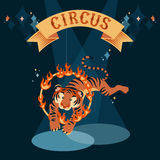 Jumping tiger. Circus show illustration. Tiger jumping through the fire ring Royalty Free Stock Image
