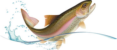 Jumping trout royalty free illustration