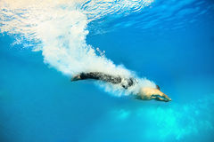 Jumping into water. Guy jump into the azure water Royalty Free Stock Photo