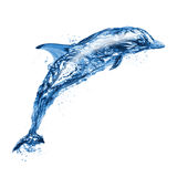 Jumping water dolphin Stock Photography