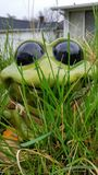Jumpy Little Frog. A happy Lawn Frog outdoors Royalty Free Stock Photo