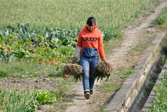 Jun Le, China: Woman Walking in Field Stock Image