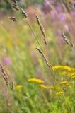 Juncia del Carex Foto de archivo libre de regalías