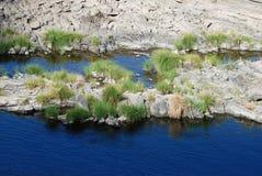 Juncia del río Foto de archivo libre de regalías
