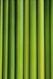 Juncia verde Fotos de archivo