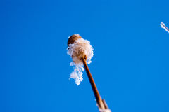 Junco bonito no inverno Imagem de Stock Royalty Free