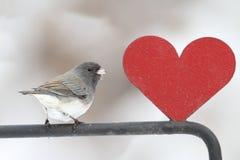 Junco con un cuore rosso immagini stock libere da diritti
