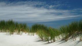 Junco na duna de areia na costa oeste de Nova Zelândia fotografia de stock royalty free