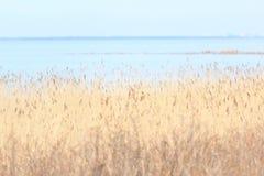 Junco no Golfo da Finlândia View-2 Imagem de Stock
