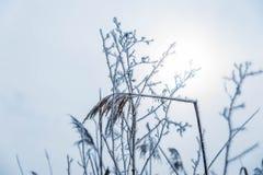 Junco quebrado, congelado no foco em um dia de inverno nevoento fotos de stock royalty free