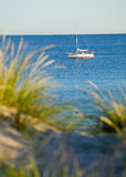 Junco verde e ocean.GN fotografia de stock