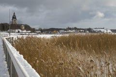 Juncos de Brown no lago congelado Foto de Stock