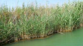 juncos do rio da excursão do barco, dalyan histórico, ortaca, koycegiz, peru video estoque