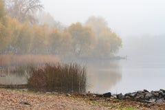 Juncos e árvores perto do rio de Dnieper em Kiev, Ucrânia Uma manhã macia do outono, névoa sobre a água fria e calma fotografia de stock royalty free