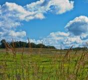 Juncos e céu do verão Imagem de Stock Royalty Free